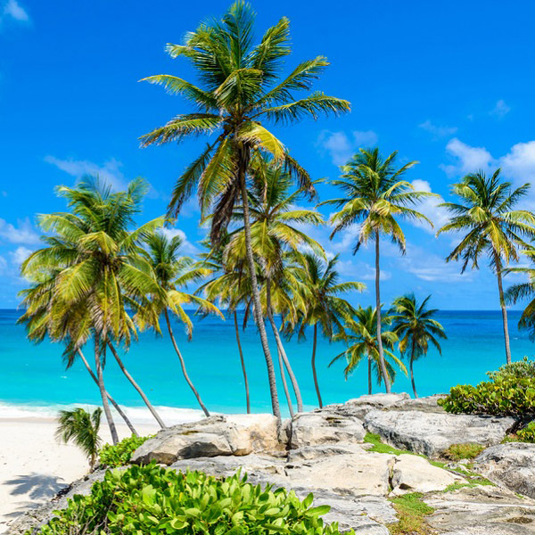 Grove of palm trees on a sandy beach and blue water in the background